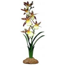 Komodo Spider Orchid 40cm 82512