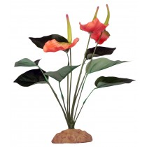 Komodo Anthurium Bush 29cm 82513