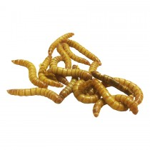 Livefood Giant Meal Worms