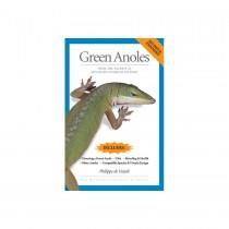 AVS Green Anoles