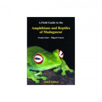 Field Guide: Amphibians & Reptiles of Madagascar
