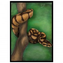 CC Greetings Card Snake