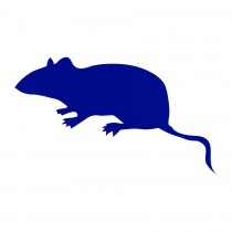 Multi Mammate Mice Small